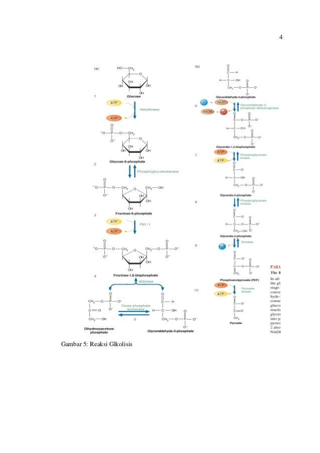 Metabolisme Lipoprotein (Kolesterol)
