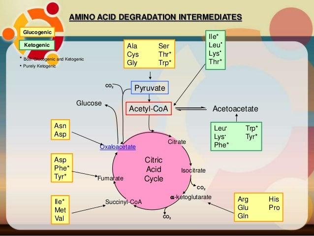 Bab 2 Metabolisme (XII)