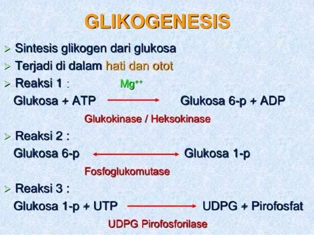 METABOLISME BAHAN PANGAN MELALUI JALUR GLIKOGENOLISIS