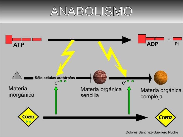 reacciones anabolicas ejemplos