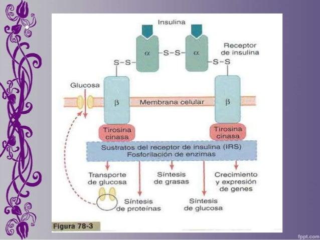 Metabolismo de los aminoacidos wikipedia