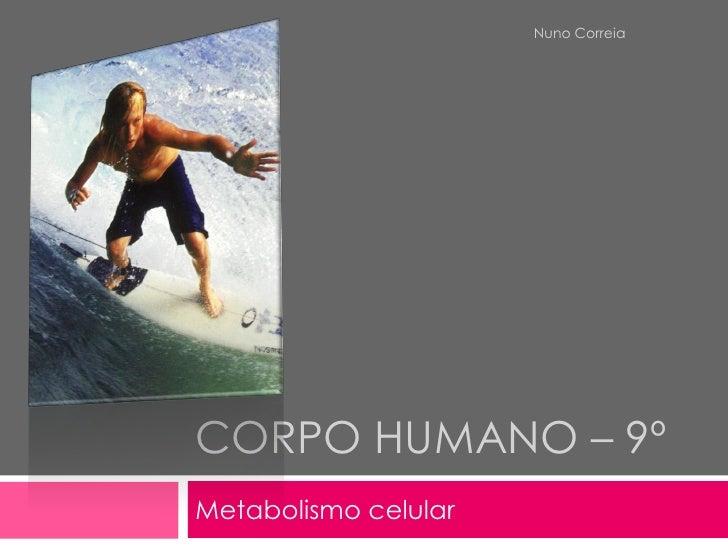 Nuno Correia     CORPO HUMANO – 9º Metabolismo celular