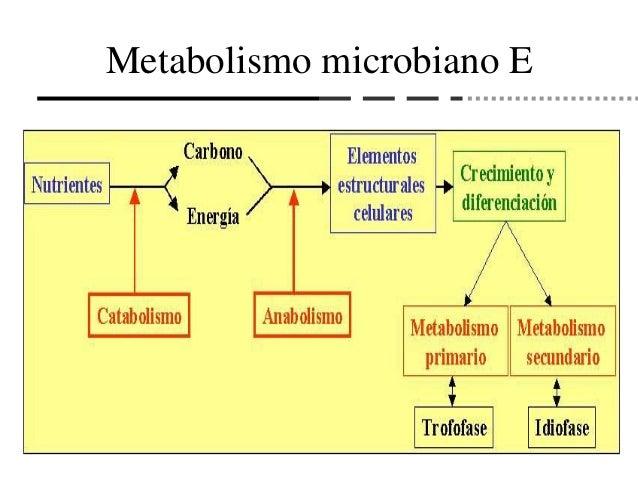 Hay enorme efectivo en Tipos de metabolismo