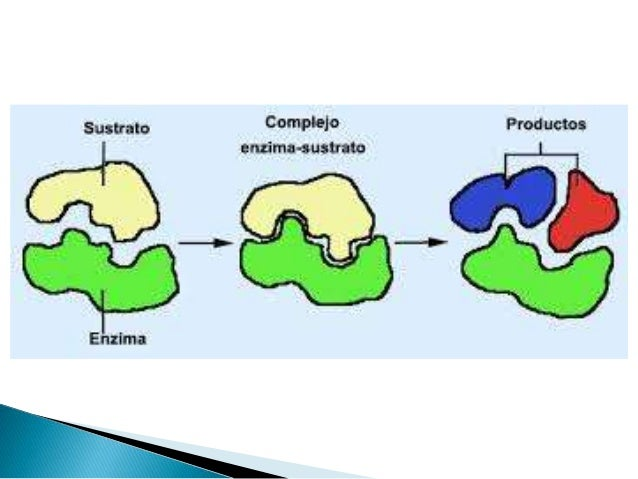 Metabolismo Bacteriano II