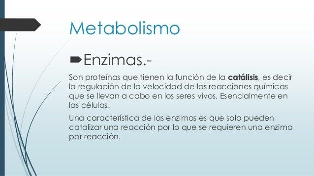 Metabolismo Enzimas.- Son proteínas que tienen la función de la catálisis, es decir la regulación de la velocidad de las ...