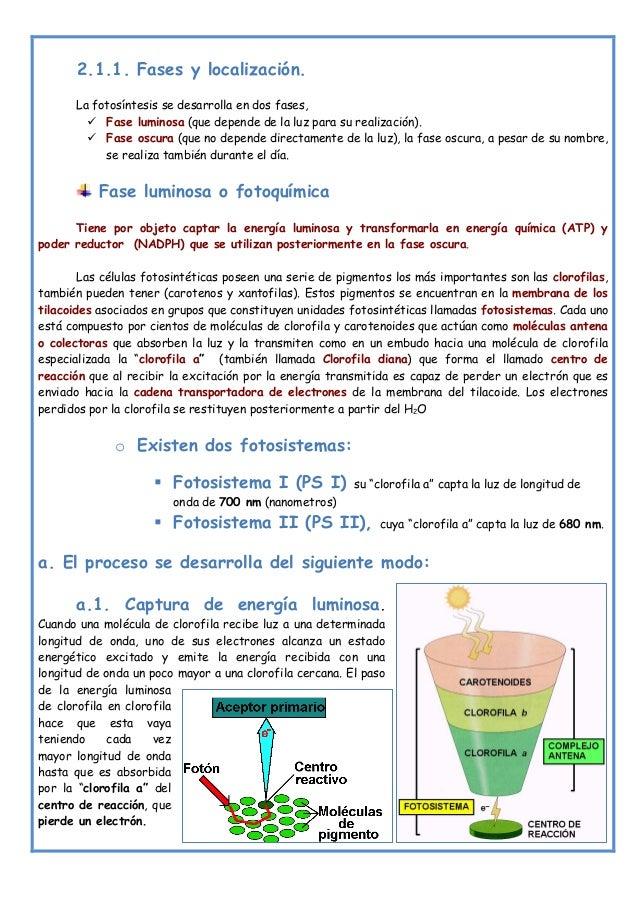Dieta Aceleradora De Tu Metabolismo Qué Hay De Cіerto