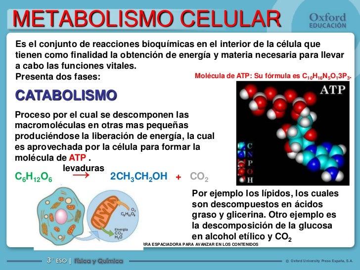 anabolicos no esteroidales