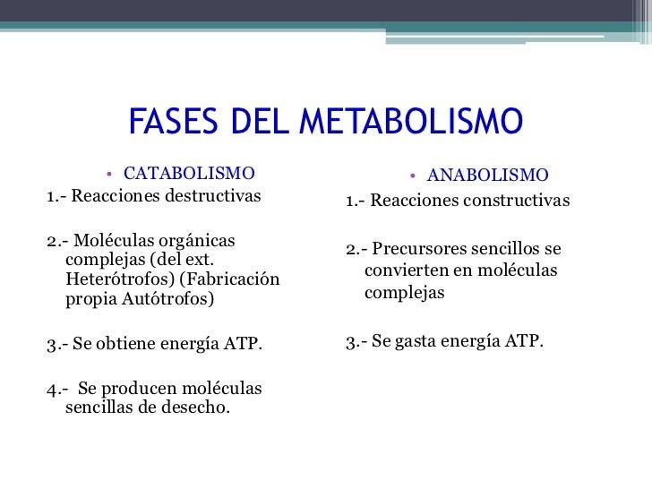 dieta acelerar metabolismo pdf cura