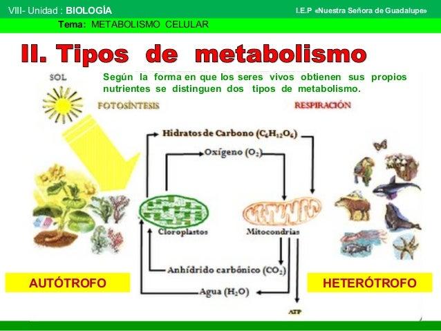 sustancias anabolicas y catabolicas