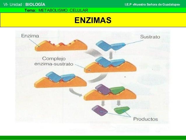 Marca y metabolismo de farmacos