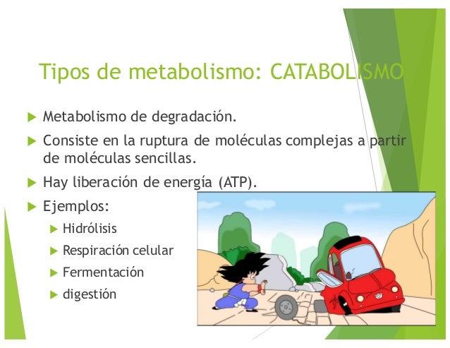 Vivir con el poder del metabolismo epub