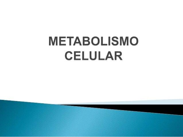 O que é Metabolismo? Metabolismo é a soma de processos químicos e físicos que ocorrem dentro de um organismo vivo.