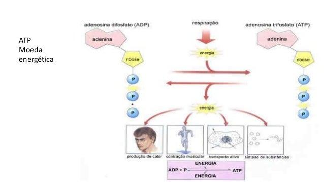 Metabolismo celular alpha