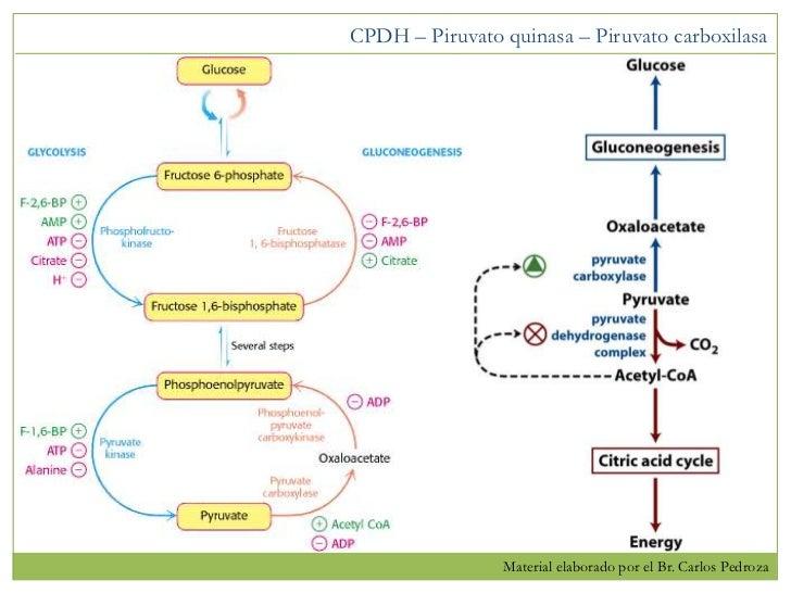 Q es bueno para acelerar el metabolismo