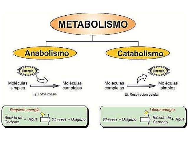 3 métodos de pensamientos mágicos que pueden ayudarlo a Declutter Cómo aumentar el metabolismo