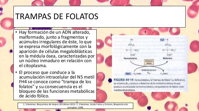 Bioquimica De Harper Slide Share | Download PDF