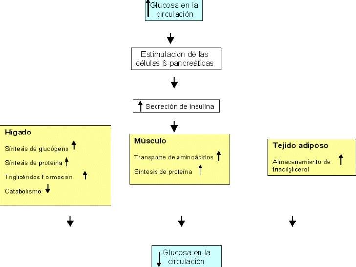 Metabolismo en diabetes