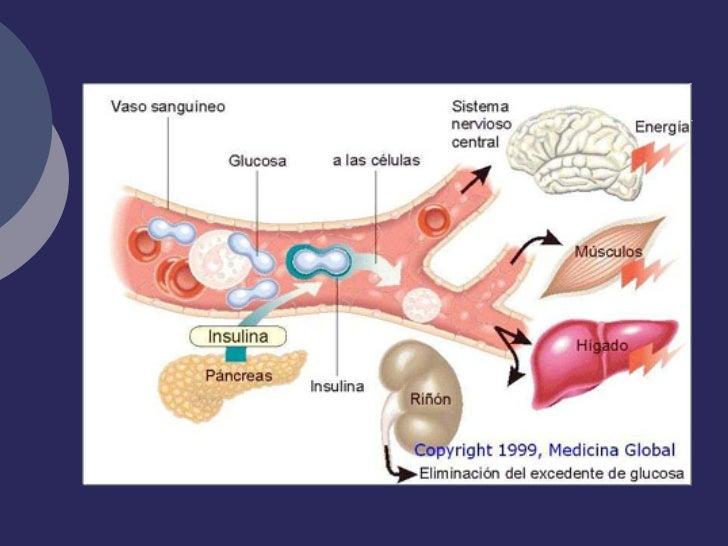Resultado de imagen para metabolismo de azucar