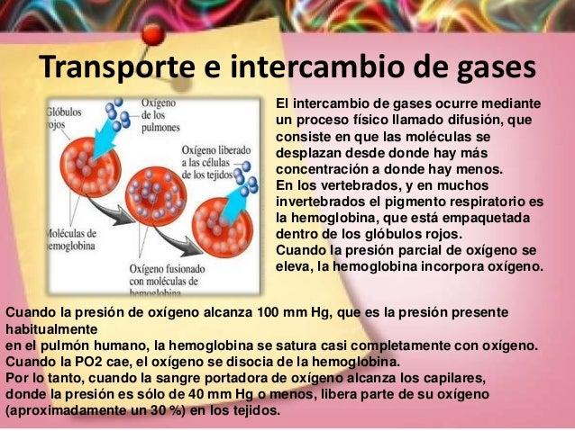Transporte e intercambio de gases El intercambio de gases ocurre mediante un proceso físico llamado difusión, que consiste...