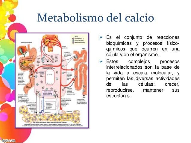 Seis cosas que hacer inmediatamente sobre Acelerar metabolismo