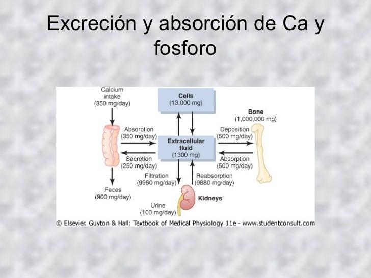 Metabolismo insulina Promoción cien una y una