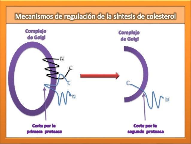 La información encima de calculadora metabolismo basal harris benedict