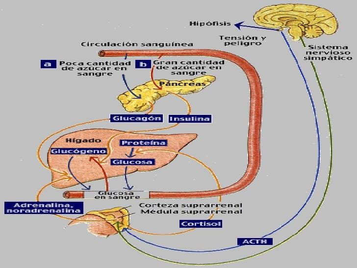 metabolismo de hidratos de carbono secretos