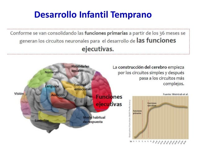 Resultado de imagen para HIERRO DESARROLLO NEUROLOGICO
