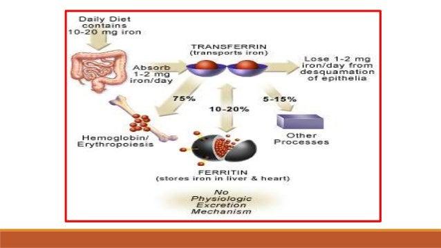 Aumentar metabolismo pastillas