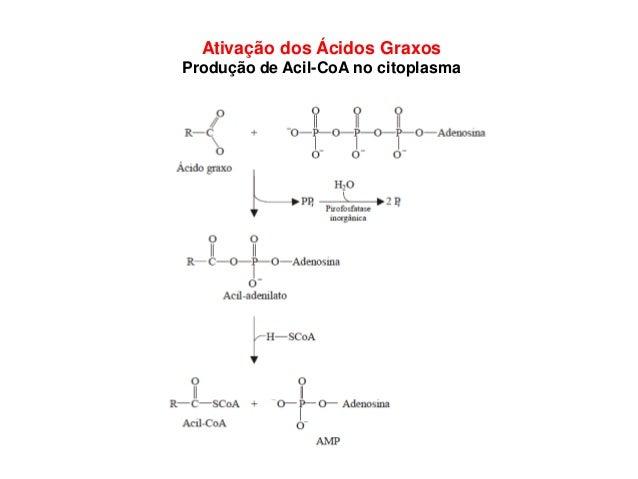 Ativação dos Ácidos Graxos Produção de Acil-CoA no citoplasma