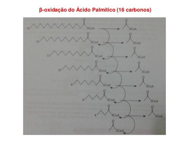 β-oxidação do Ácido Palmítico (16 carbonos)