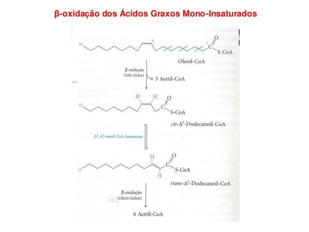 β-oxidação dos Ácidos Graxos Poli-Insaturados