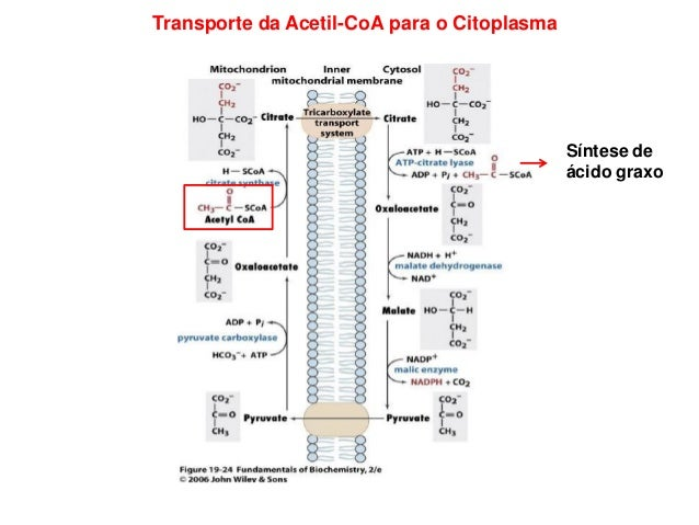 Primeiro Passo: Formação de Malonil-CoA