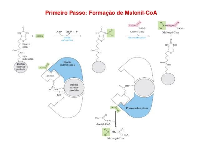 Segundo Passo: Malonil transferido para a proteína carreadora de acila