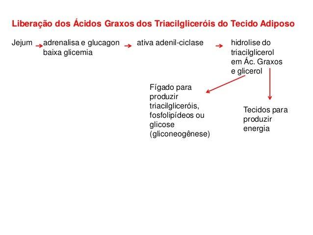 Liberação dos Ácidos Graxos dos Triacilgliceróis do Tecido Adiposo Jejum adrenalisa e glucagon ativa adenil-ciclase hidrol...