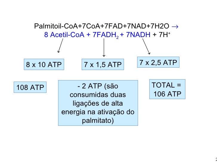 Palmitoil-CoA+7CoA+7FAD+7NAD+7H2O   8 Acetil-CoA + 7FADH 2  + 7NADH  + 7H + 8 x 10 ATP 7 x 1,5 ATP 7 x 2,5 ATP 108 ATP - ...