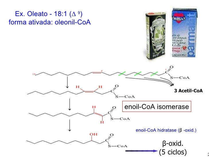 Ex. Oleato -  18:1 (∆  9 )   forma ativada: oleonil-CoA 3 Acetil-CoA β -oxid. (5 ciclos) enoil-CoA isomerase enoil-CoA hid...