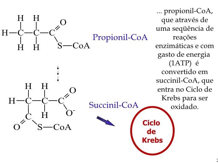 Propionil-CoA Succinil-CoA ... propionil-CoA, que através de uma seqüência de reações enzimáticas e com gasto de energia  ...