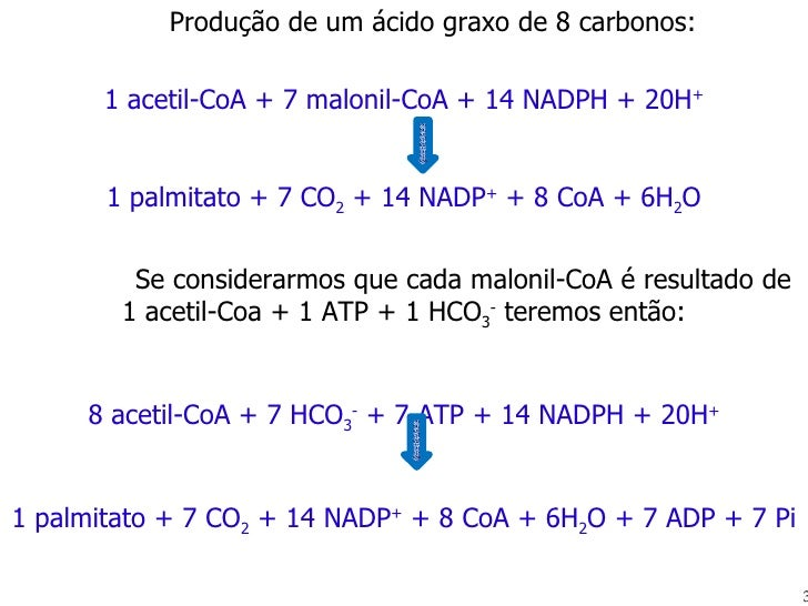 Produção de um ácido graxo de 8 carbonos: 1 acetil-CoA + 7 malonil-CoA + 14 NADPH + 20H +   1 palmitato + 7 CO 2  + 14 NAD...