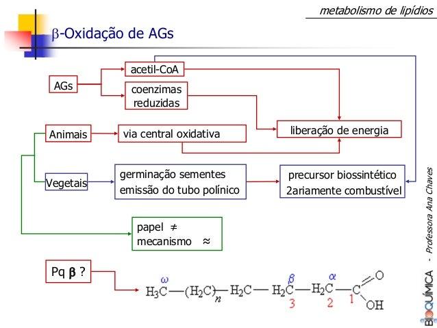 metabolismo de lipídios β-Oxidação de AGs AGs via central oxidativa coenzimas reduzidas papel ≠ mecanismo ≈ germinação sem...