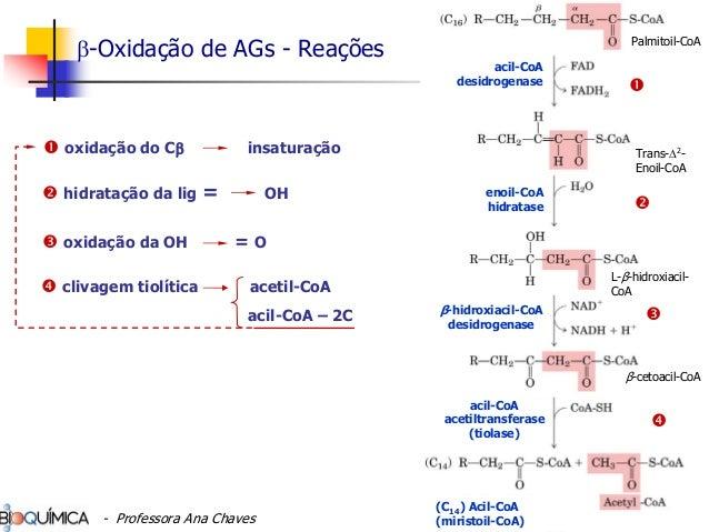 clivagem tiolítica acetil-CoA acil-CoA – 2C oxidação do Cβ insaturação hidratação da lig = OH oxidação da OH = O Trans-Δ2 ...
