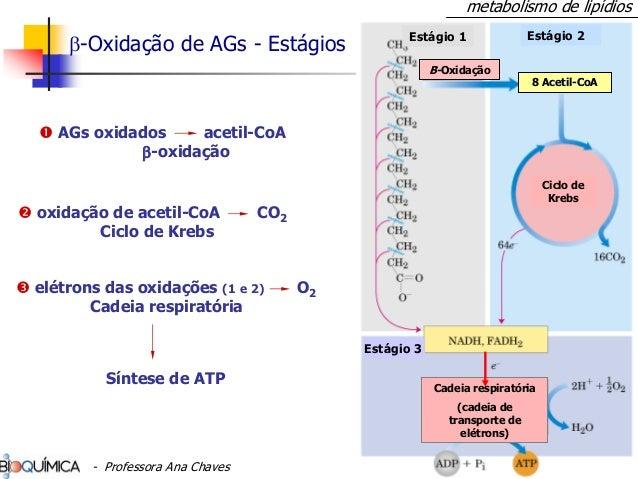 β-Oxidação de AGs - Estágios Estágio 1 Estágio 2 Β-Oxidação Ciclo de Krebs Cadeia respiratória (cadeia de transporte de el...