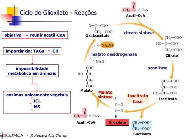 metabolismo de lipídios Malato sintase Isocitrato liase aconitase citrato sintase malato desidrogenase Citrato Isocitrato ...