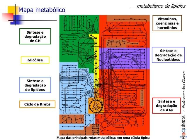 Mapa das principais rotas metabólicas em uma célula típica Síntese e degradação de CH Síntese e degradação de AAs Vitamina...