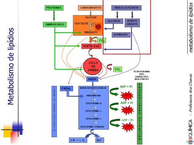 Metabolismodelipídios metabolismodelipídios-ProfessoraAnaChaves