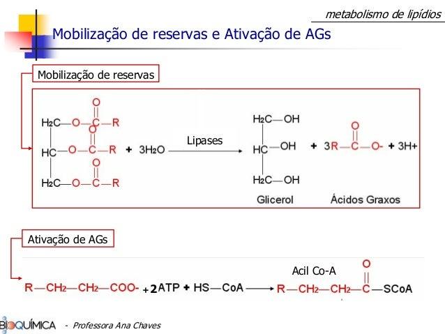 metabolismo de lipídios Mobilização de reservas e Ativação de AGs Lipases Mobilização de reservas +2 Ativação de AGs Acil ...