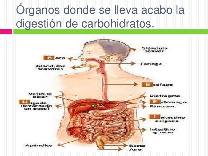 dieta acelerar metabolismo mejores soluciones