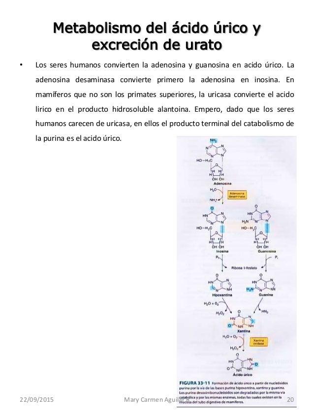Acido urico pdf unam alimentos no permitidos acido urico hierbas para el acido urico dolor - Alimentos prohibidos con acido urico ...