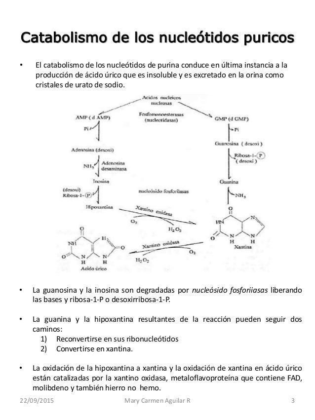 formula para calcular el metabolismo basal medicina natural