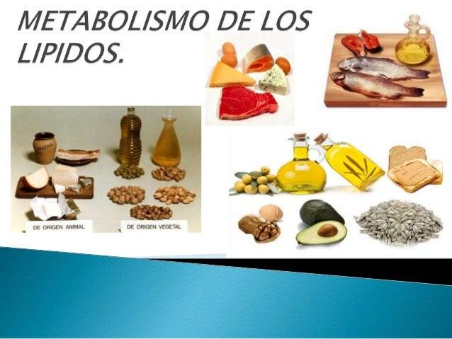 lipidos esteroides ejemplos